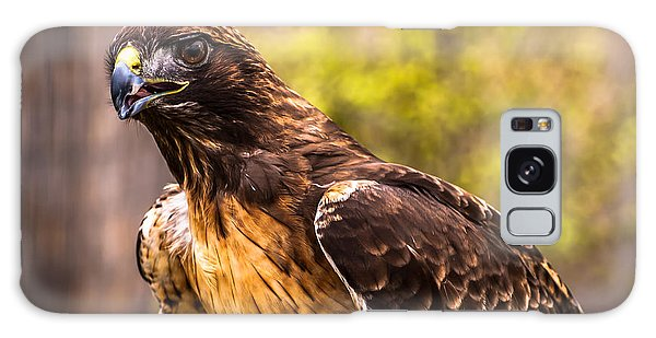 Red Tailed Hawk Profile 2 Galaxy Case