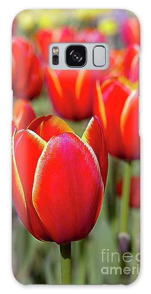 Red And Yellow Tulips I Galaxy Case