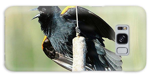 Red-winged Blackbird Galaxy Case by Jack Moskovita