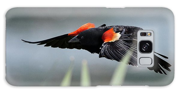 Galaxy Case featuring the photograph Red-winged Blackbird by Ken Stampfer