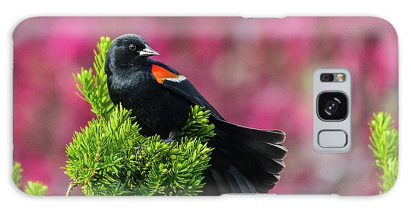 Red Winged Blackbird With Crabapple Blossoms Galaxy Case
