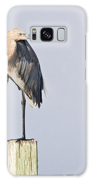 Reddish Egret On Piling Galaxy Case