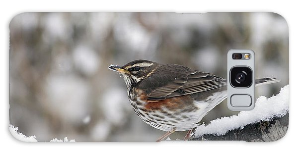 Redwing Perched On A Snowy Branch Galaxy Case
