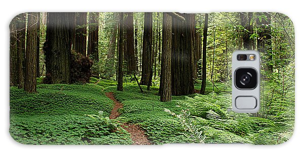 Redwood Forest Path Galaxy Case