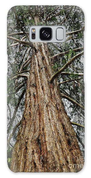 Redwood Reaches For The Sky Galaxy Case