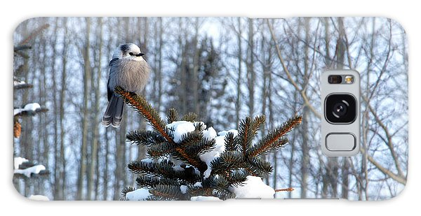 Refined Little Gray Jay In Colorado Galaxy Case by Carol M Highsmith