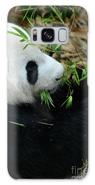 Relaxed Panda Bear Eats With Green Leaves In Mouth Galaxy Case