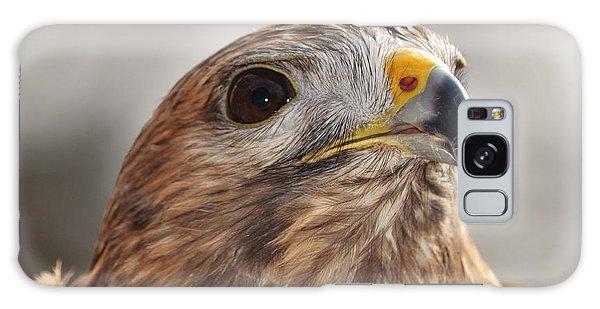 Rescued Hawk Galaxy Case