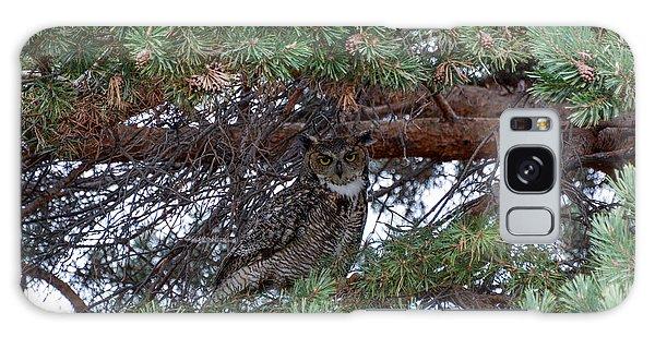 Resting Owl Galaxy Case