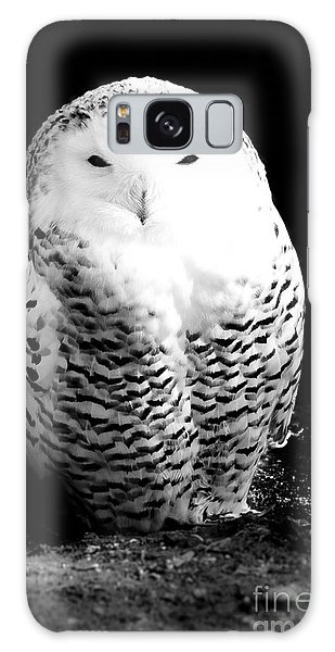 Resting Snowy Owl Galaxy Case by Darcy Michaelchuk
