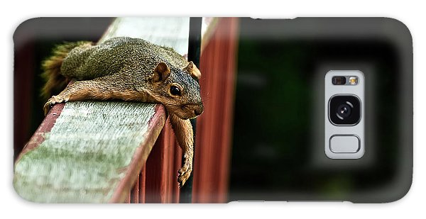 Resting Squirrel Galaxy Case by  Onyonet  Photo Studios