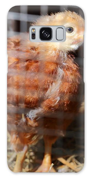 Rhode Island Red Chick At Five Weeks Galaxy Case