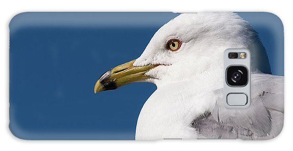 Ring-billed Gull Portrait Galaxy Case