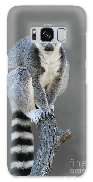 Ring-tailed Lemur #6 V2 Galaxy Case