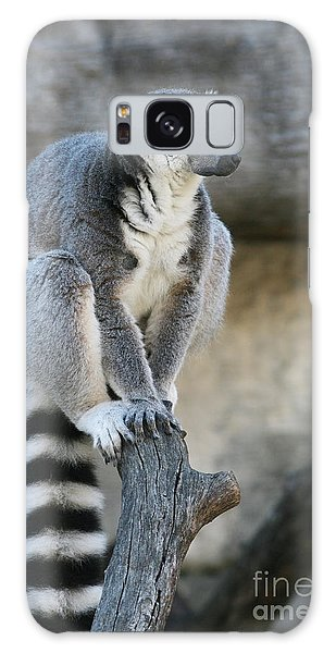 Ring-tailed Lemur #7 Galaxy Case