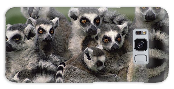 Galaxy Case featuring the photograph Ring-tailed Lemur Lemur Catta Group by Gerry Ellis