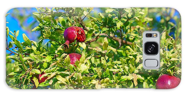 Ripe Pomegranate On The Tree In Jerusalem During Sukkoth Galaxy Case