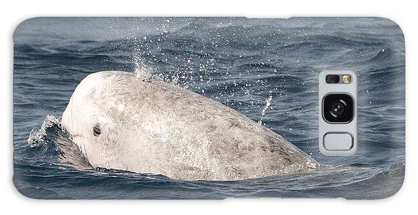 Risso Dolphin Galaxy Case