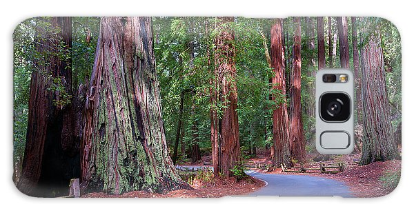 Road Through Redwood Grove Galaxy Case