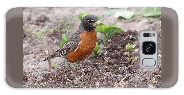 Robin Hunting Galaxy Case