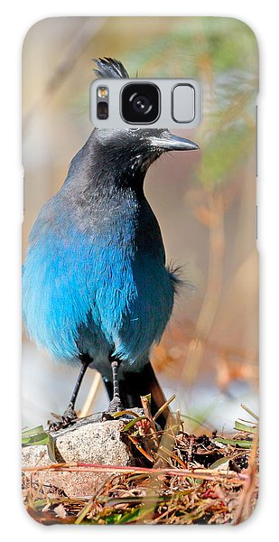 Rocky Mountain Steller's Jay Galaxy Case