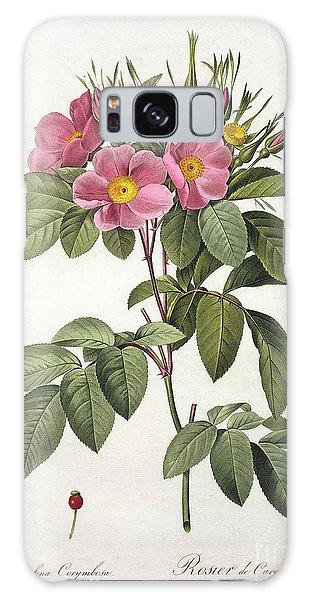 Botanical Garden Galaxy Case - Rosa Carolina Corymbosa by Pierre Joseph Redoute