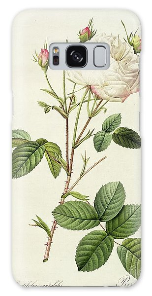 Plants Galaxy Case - Rosa Centifolia Mutabilis by Pierre Joseph Redoute