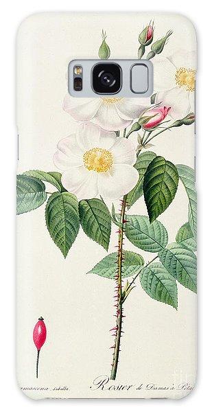 Botanical Garden Galaxy Case - Rosa Damascena Subalba by Pierre Joseph Redoute