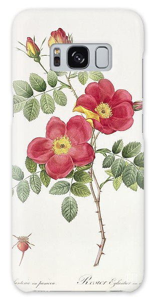 Botanical Garden Galaxy Case - Rosa Eglantera Punicea by Pierre Joseph Redoute