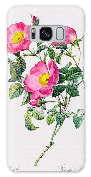 Rose Galaxy Case - Rosa Lumila by Pierre Joseph Redoute