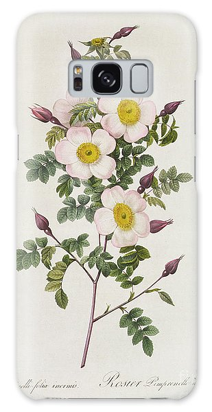 Botanical Garden Galaxy Case - Rosa Pimpinelli Folia Inermis by Pierre Joseph Redoute