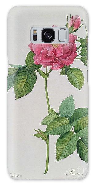 Rose Galaxy S8 Case - Rosa Turbinata by Pierre Joseph Redoute