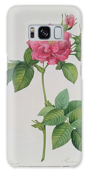 Rose Galaxy Case - Rosa Turbinata by Pierre Joseph Redoute