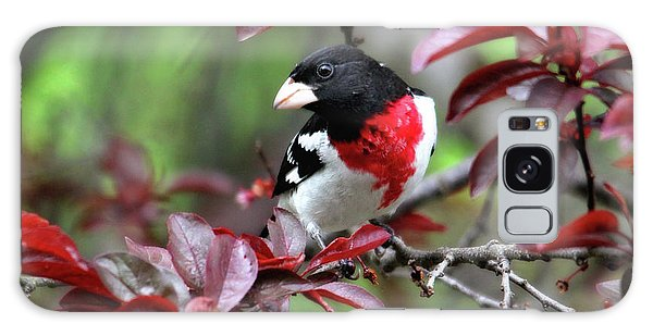 Rose-breasted Grosbeak Galaxy Case