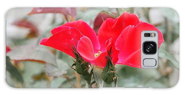 Rosebuds N Red Rose Galaxy Case by Margie Avellino