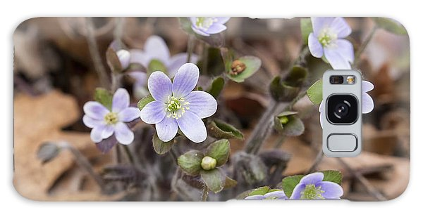 Round Lobed Hepatica Panorama Galaxy Case