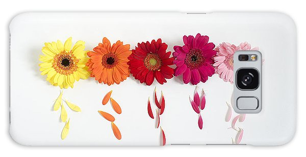Row Of Gerbera Daisies On White Background Galaxy Case