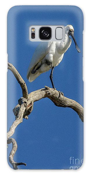 Royal Spoonbill 01 Galaxy Case