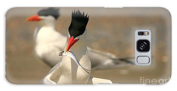 Royal Tern Catch Galaxy Case