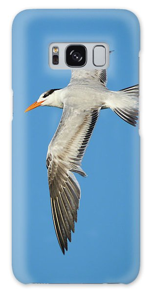 Royal Tern In Flight Galaxy Case