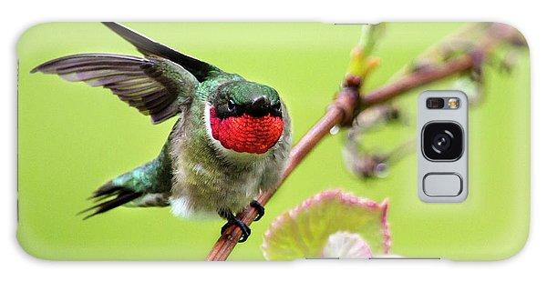 Galaxy Case featuring the photograph Ruby Garden Hummingbird by Christina Rollo