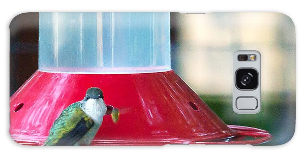 Ruby-throated Hummingbird At Feeder Galaxy Case by Edward Peterson