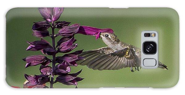 Ruby Throated Hummingbird At Purple Salvia Flower Galaxy Case