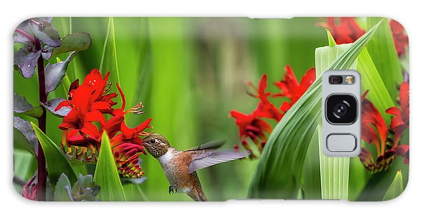 Galaxy Case featuring the photograph Rufous Hummingbird Feeding, No. 3 by Belinda Greb