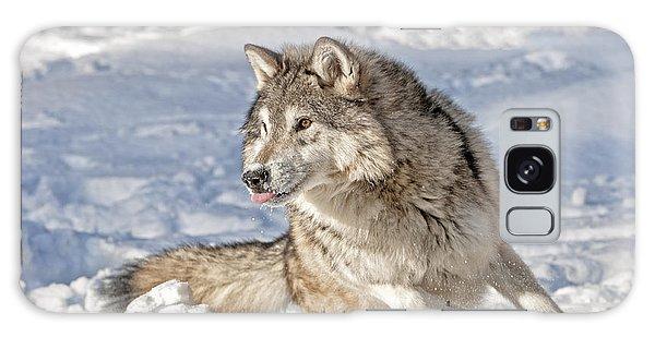 Running Wolf Galaxy Case