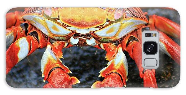 Sally Lightfoot Crab Galaxy Case by Sue Cullumber