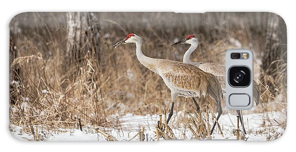 Sandhill Crane 2016-4 Galaxy Case by Thomas Young
