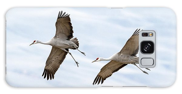 Sandhill Crane Approach Galaxy S8 Case