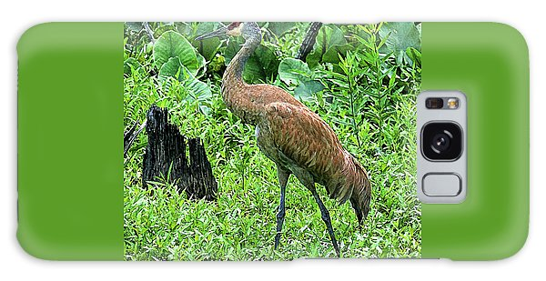 Sandhill Crane At Sandy Ridge Reservation Galaxy Case