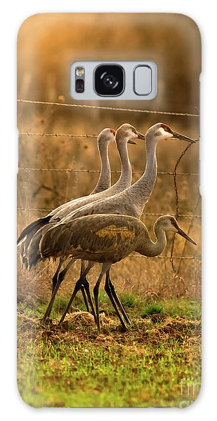 Sandhill Cranes Texas Fence-line Galaxy Case by Robert Frederick
